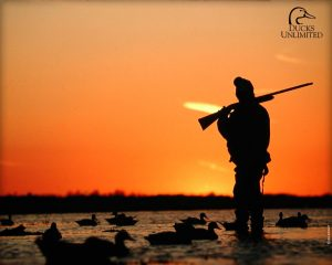 Waterfowl Hunt in MO